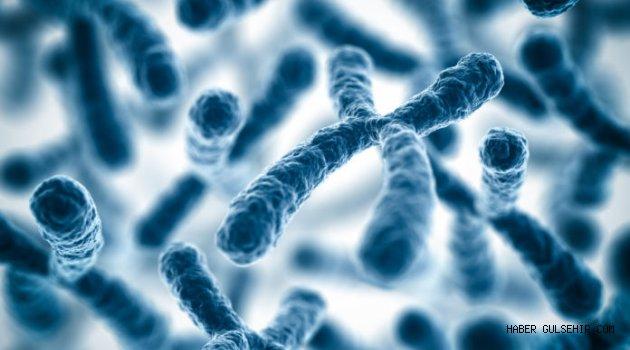 İnsan Kromozomu İlk Defa Tamamen Dizilendi