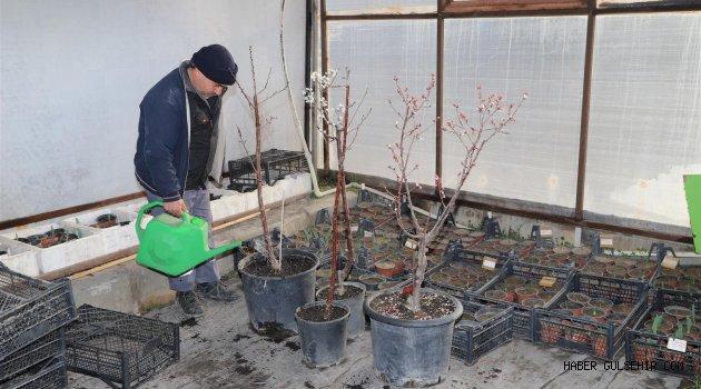 Nevşehir Belediyesi Sera Bitkileri Yetiştiriyor