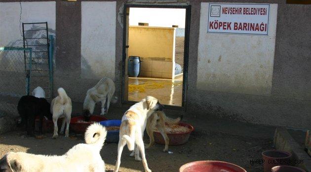 Nevşehir Belediyesi, Sokak Köpekleri ile İlgili Etkin Çalışma Yürütüyor.