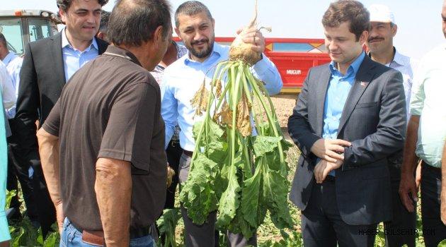 Nevşehirin tarımsal üretiminde önde gelen ürünlerden olan Şeker Pancarının Hasadı Başladı.