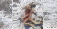 Gülşehir'de Aç Kurtlar Köpeği Yedi.