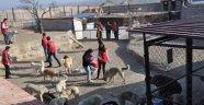 Gençlik Merkezleri, Ürgüp Belediyesine ait Geçici Köpek Bakımevi'ni ziyaret etti.