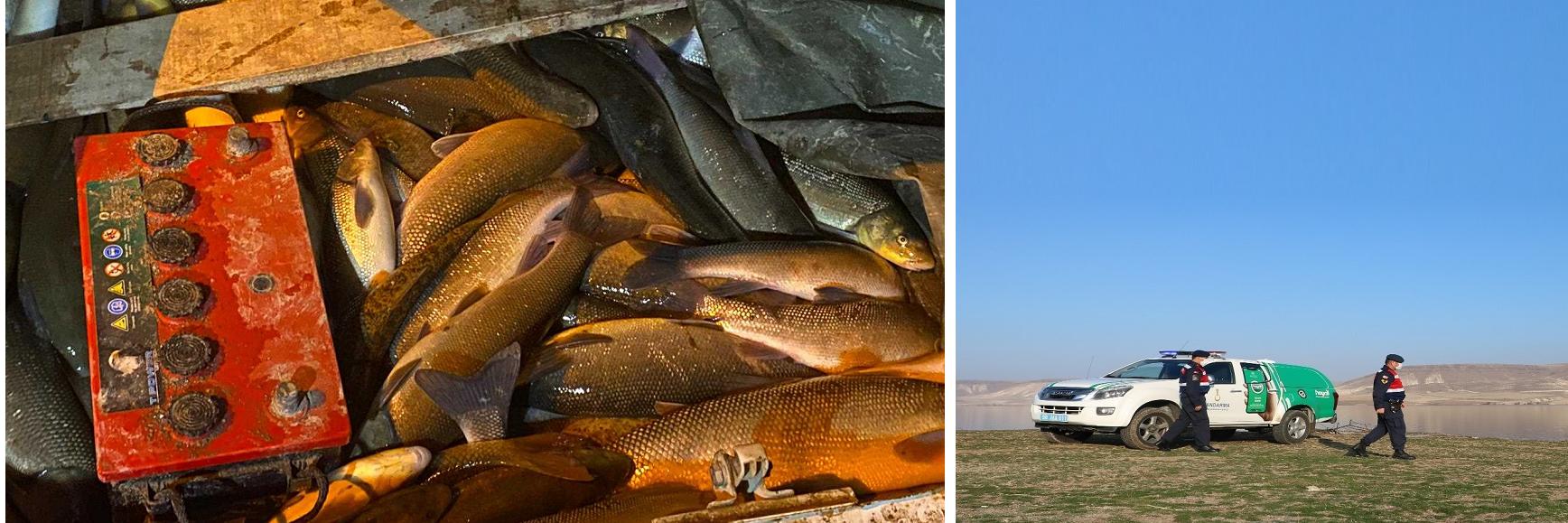 Gülşehir Jandarması, Elektrikle Balık Katliamına Dur Dedi!