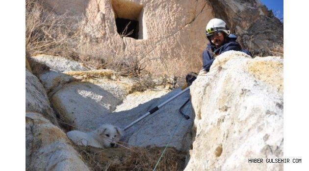 Ürgüp Belediyesi Kayalıklarda Mahsur Kalan Köpeği Kurtardı